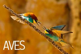 Galería de Aves