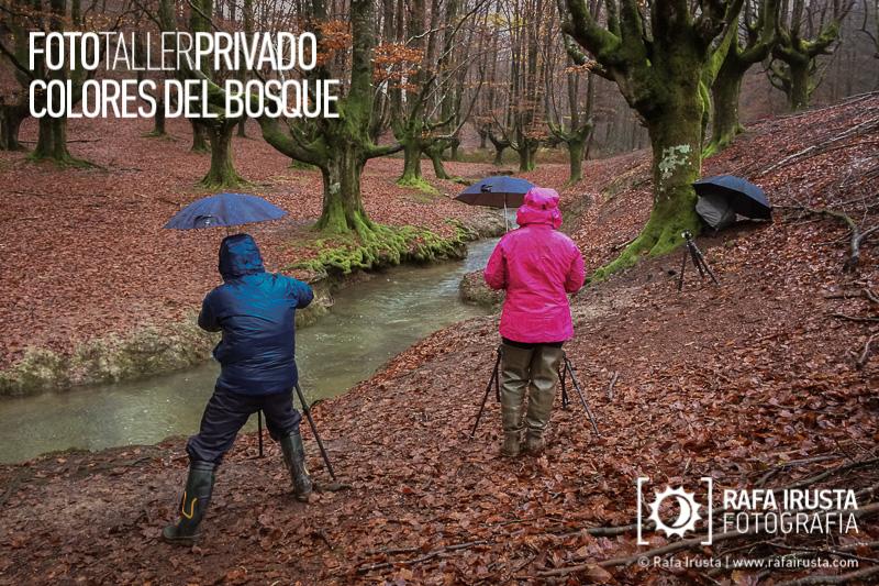 Taller Privado Fotografía de Bosque, Fotografiando en el bosque