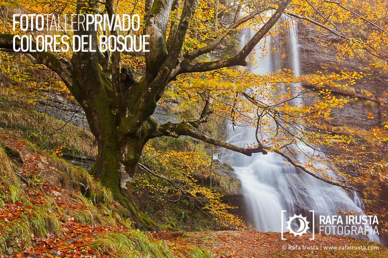 Taller Privado Fotografía de Bosque, Fotografiando cascadas de agua