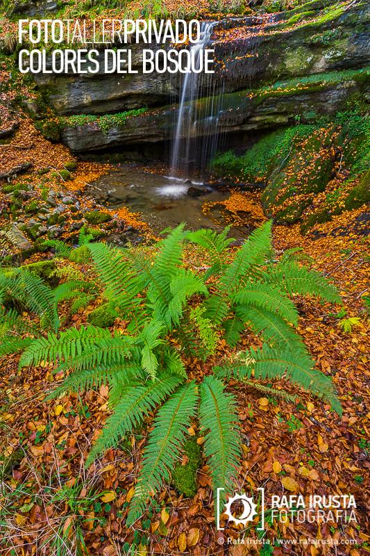 Taller Privado Fotografía de Bosque, El helecho y la cascada de agua