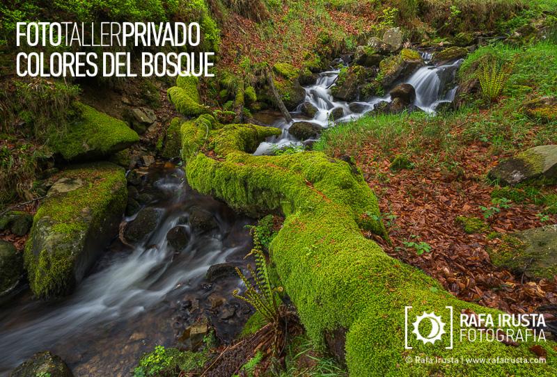 Taller Privado Fotografía de Bosque, Aprendiendo a fotografiar rincones del bosque