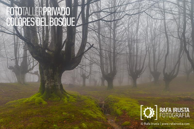 Taller Privado Fotografía de Bosque, Niebla en el bosque