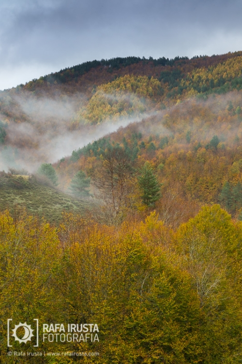 Selva de Irati, Navarra, Spain