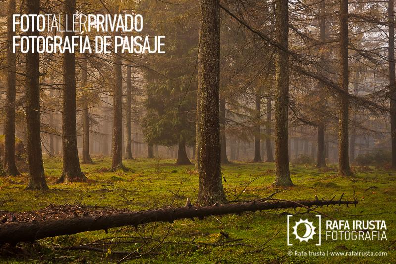 Taller Privado Fotografía de Paisaje, Primeras luces en el bosque de Gorbea