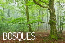 Galería de Bosques