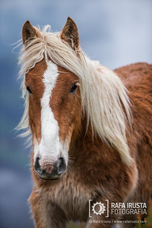 Probando Canon EF 200-400mm f/4L IS, retrato de un caballo