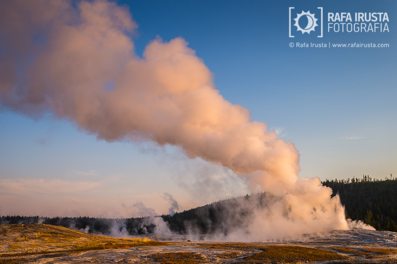 Old Faithful geyser at sunrise