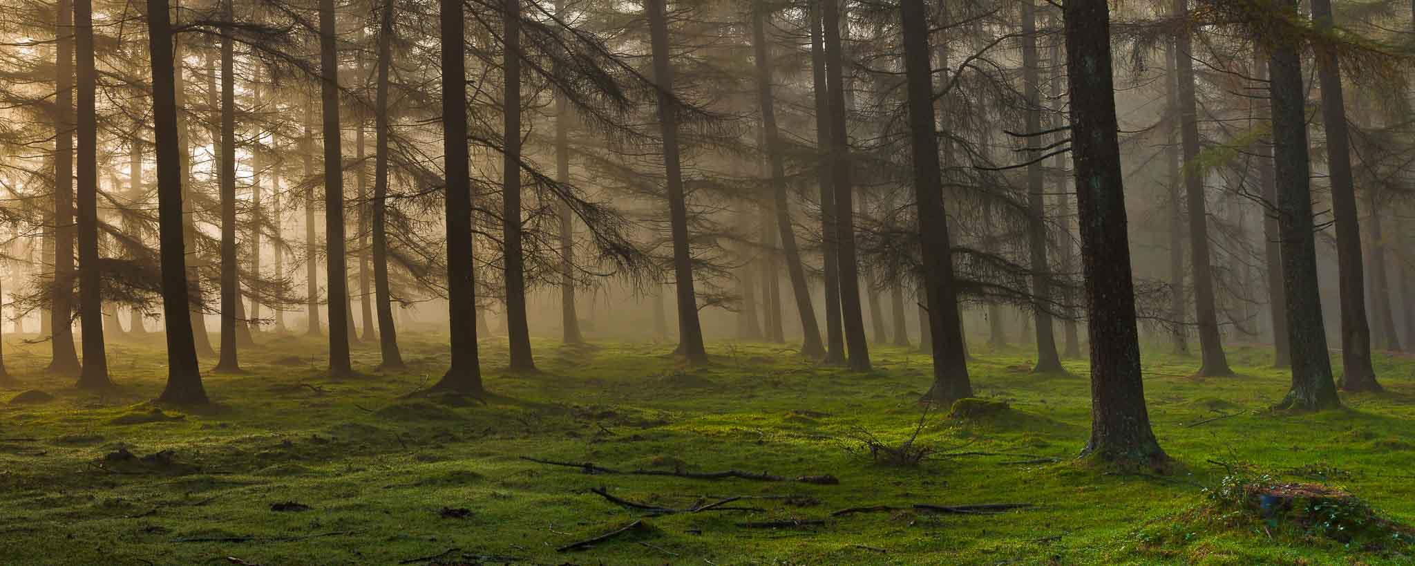 Cabecera Bosques