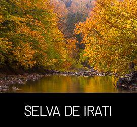 Galería Selva de Irati, Navarra