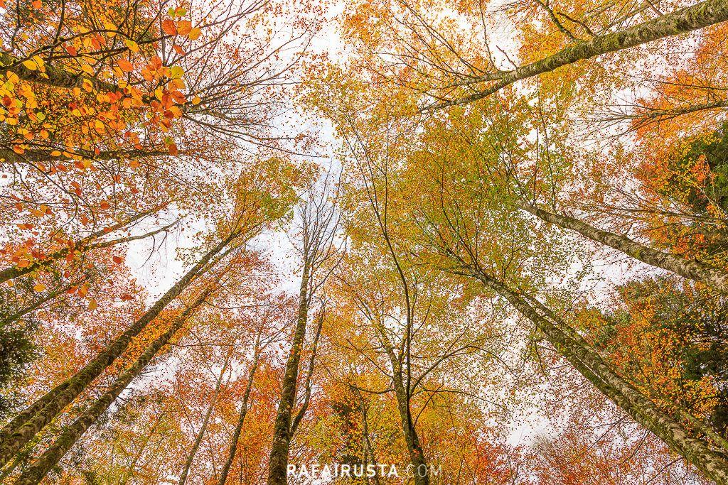 Selva de Irati, Navarra