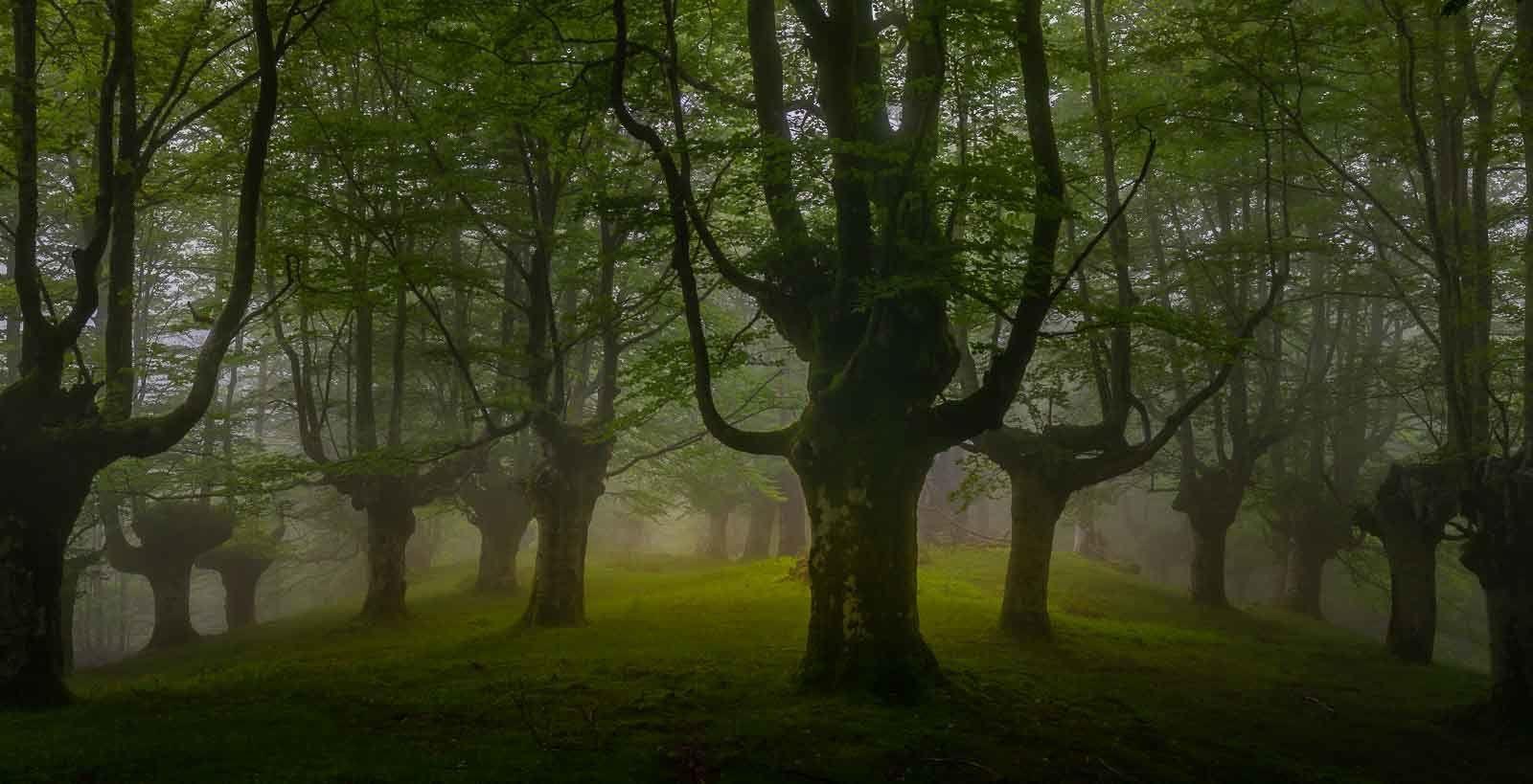 Taller Bosques de Bizkaia
