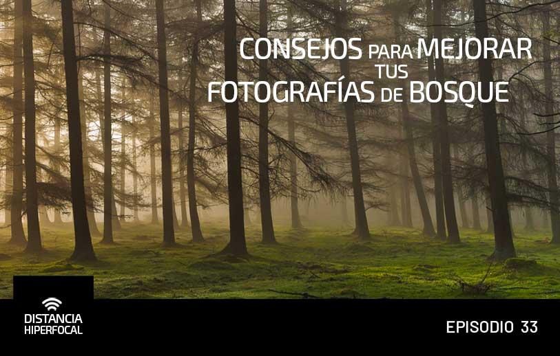 Consejos para mejorar tus fotografías de bosque