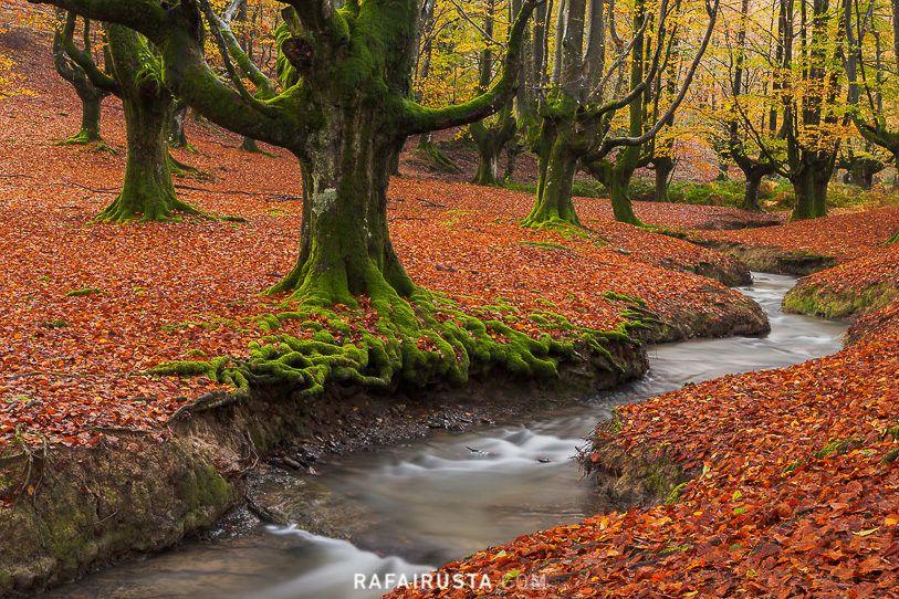 Bosque de Otzarreta, Gorbea, Bizkaia