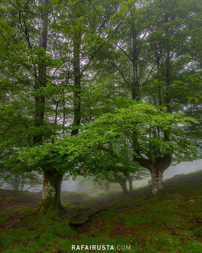 Entrada al bosque, Gorbea, Bizkaia