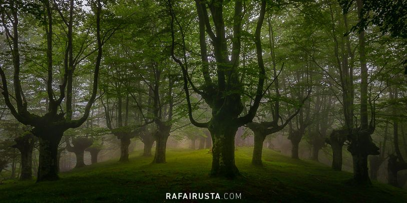 La magia de los bosques, Gorbea, Bizkaia