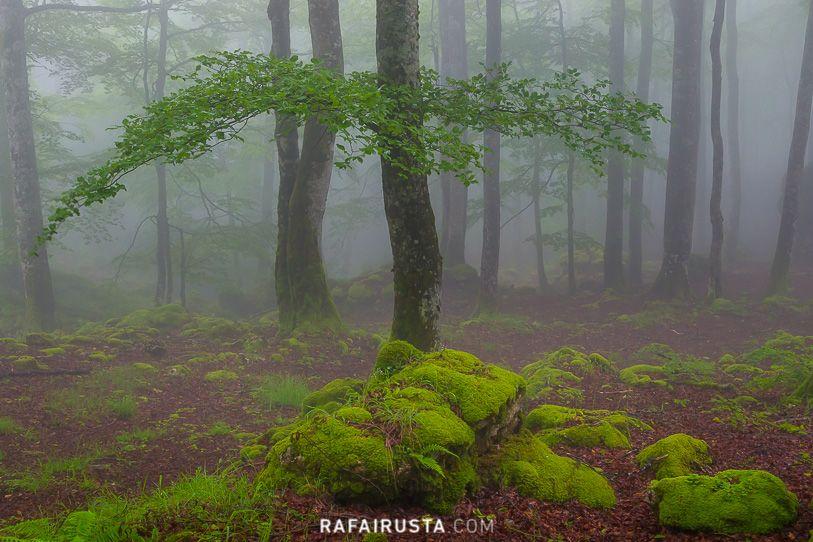 Sierra de Urbasa, Navarra